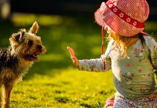 Ребенок боится собак. Как помочь ребенку?